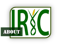 https://sites.google.com/a/irri.org/iric/home/a-irri-org-iric-about/about.png